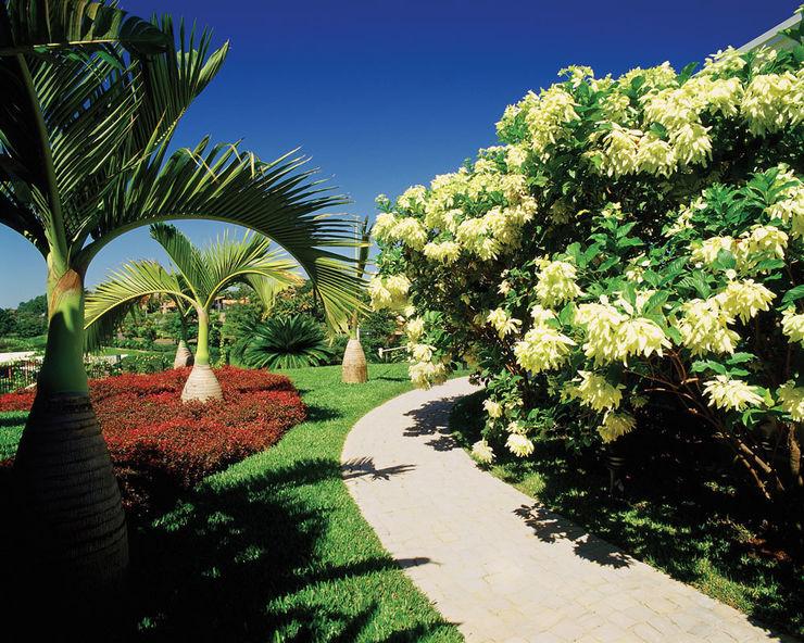 Marcelo Novaes Paisagismo Tropical style garden