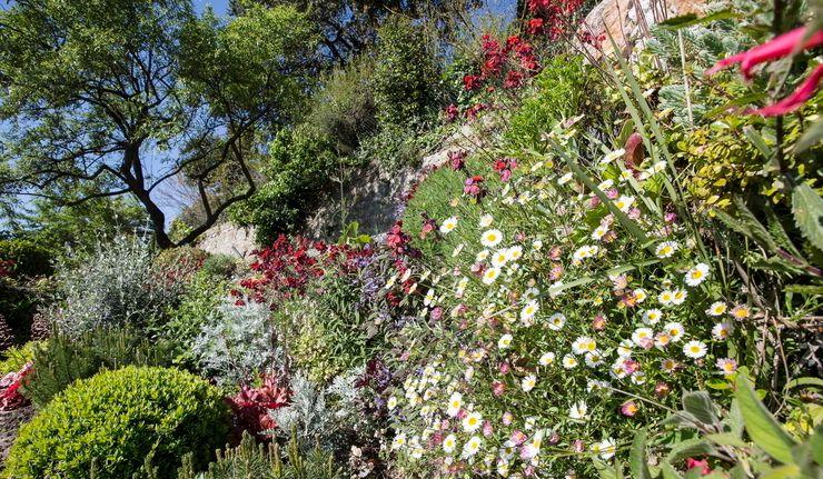 JUNGLE ART Eclectic style garden