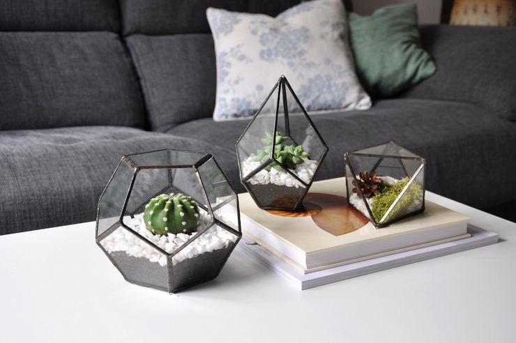 ZetaGlass HouseholdPlants & accessories Glass Transparent
