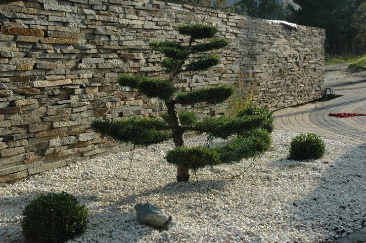bonsai greenin
