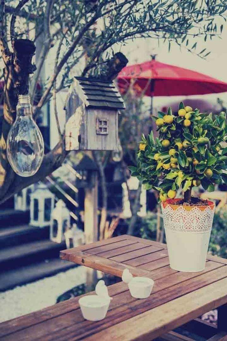 Maurine Tric Garden Accessories & decoration