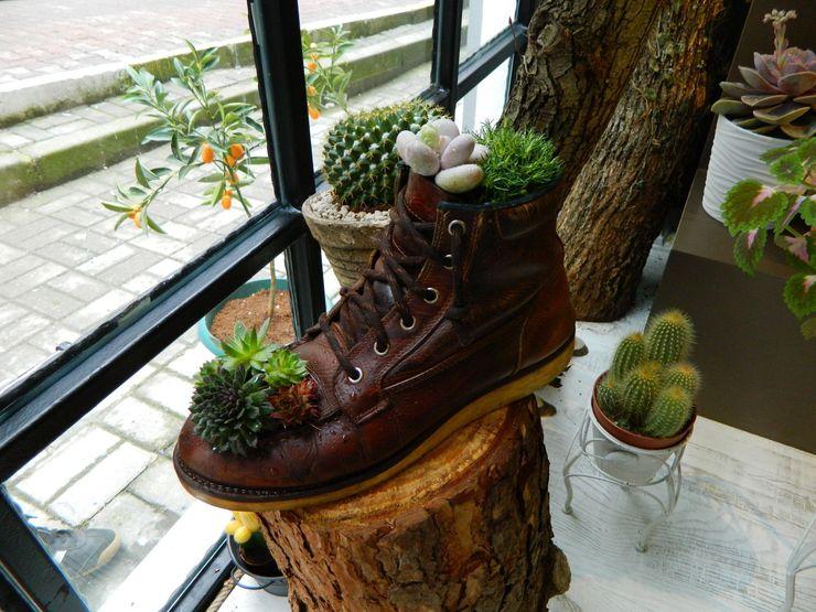 Terraqua Design Garden Plants & flowers