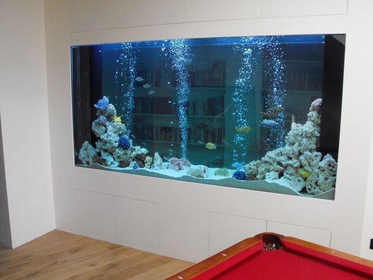 1500 litre bespoke through wall aquarium in a Surrey home Aquarium Services Pasillos, vestíbulos y escaleras modernos