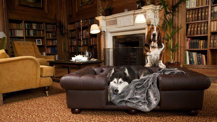 Balmoral large sofa in Chestnut faux leather homify غرفة المعيشةأريكة ومقاعد إسترخاء جلد صناعي