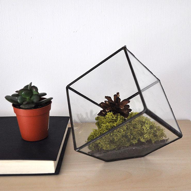 ZetaGlass MaisonPlantes et accessoires Verre Transparent