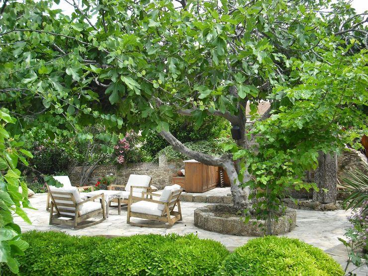 Feng Shui Revelation-Fengshui Jardin minimaliste