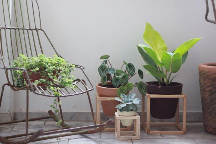 Pomelo Garden Plants & flowers
