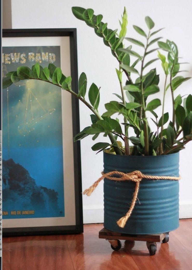 Pomelo Interior landscaping