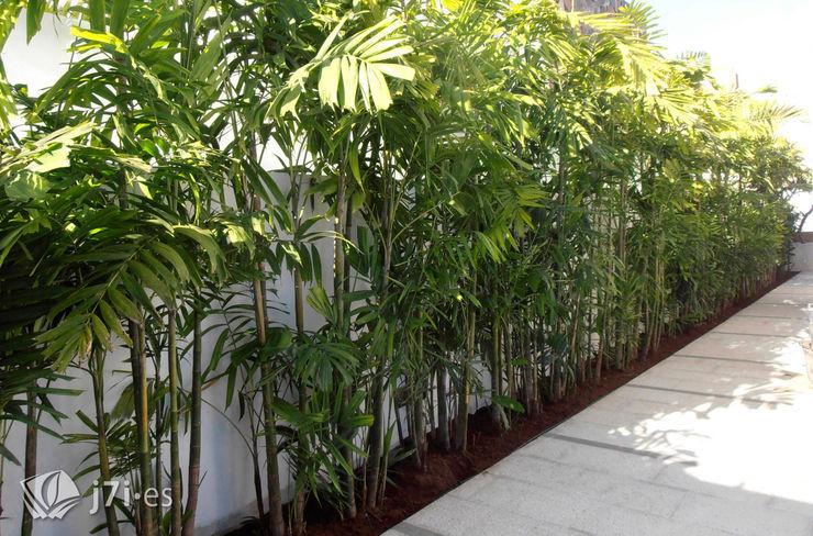 7 detalles para una pared tropical Jardineria 7 islas Jardines de estilo tropical