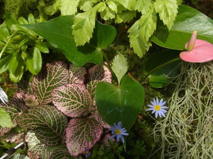 株式会社 髙橋造園土木 Takahashi Landscape Construction.Co.,Ltd Balconies, verandas & terraces Plants & flowers