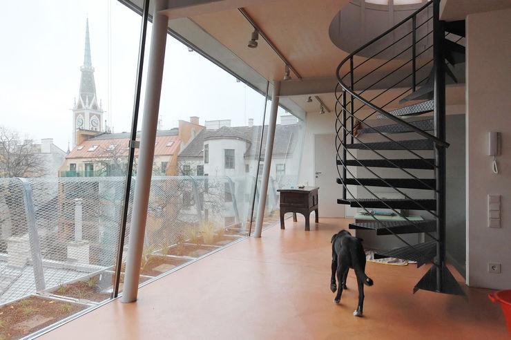 loft conversion, 1180 vienna allmermacke Modern corridor, hallway & stairs Glass