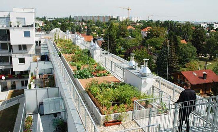 Dachterrasse, Mietergärten Kräftner Landschaftsarchitektur Moderner Garten
