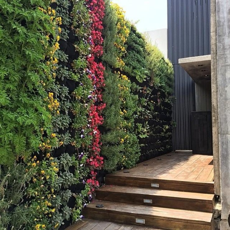 Jardines Verticales HUICHOL Moderne Häuser
