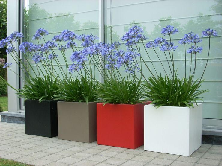 SO GARDEN 花園植物盆栽與花瓶
