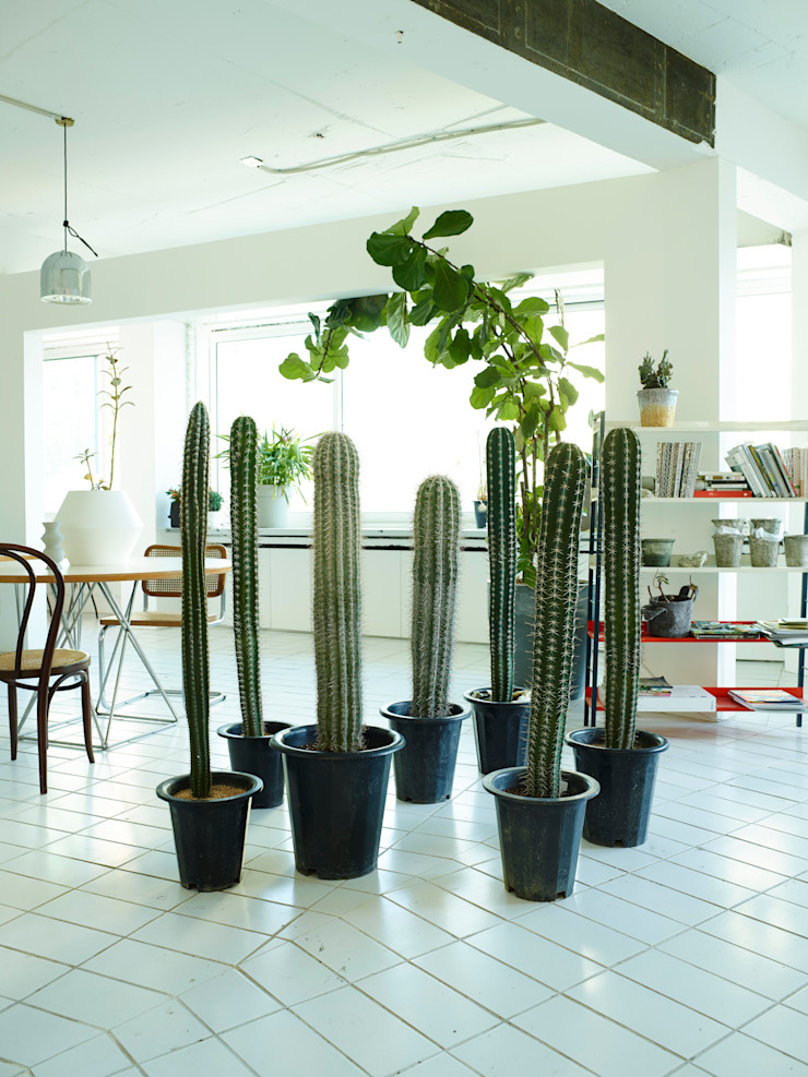 미니 가든 GARDEN STUDIO GartenPflanzen und Blumen