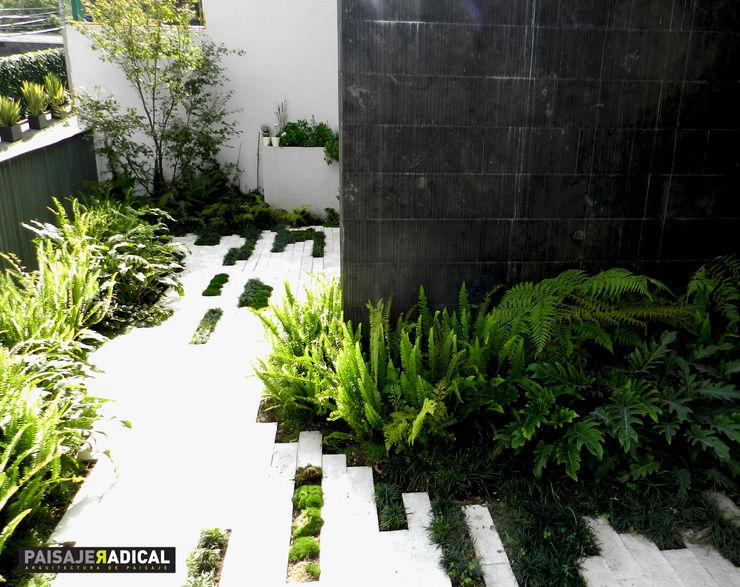 Tratamiento de pavimento y vegetación Paisaje Radical Jardines de estilo moderno