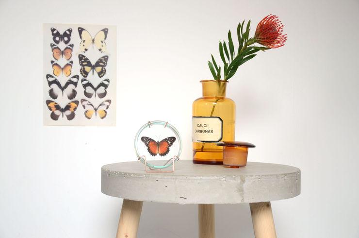 Taxidermy; de kunst van het opzetten a TICKET HOME WoonkamerAccessoires & decoratie