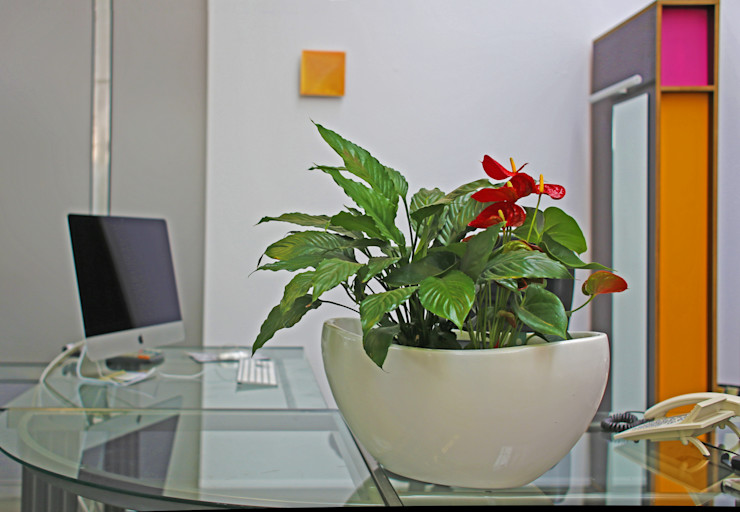 BAUMHAUS GmbH Raumbegrünung Pflanzenpflege Modern office buildings