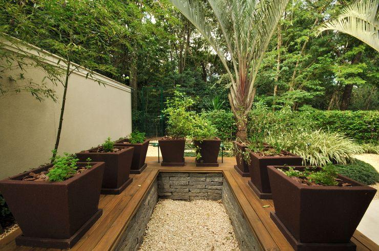 alexandre galhego paisagismo Tropical style garden