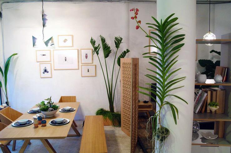 Clorofilia 客廳 合板 Wood effect