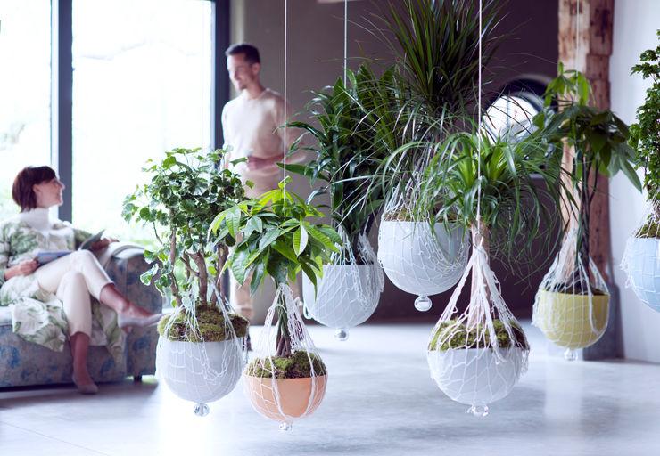 Pflanzenfreude.de Paesaggio d'interni