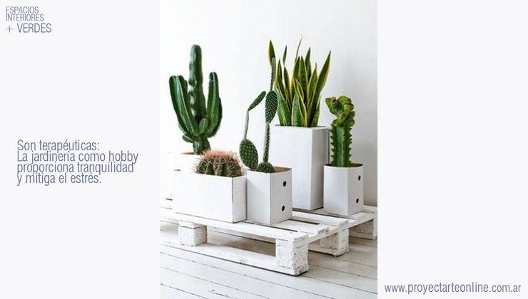 info9138 JardínPlantas y flores