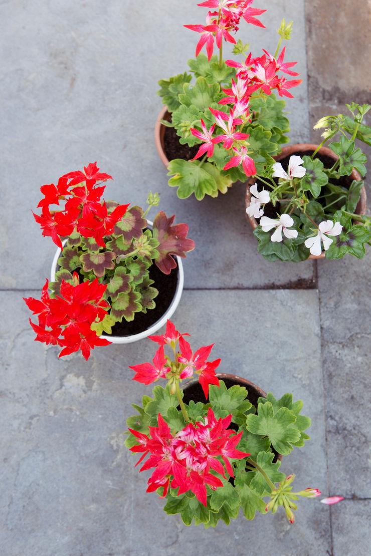 Pflanzenfreude.de Classic style balcony, porch & terrace