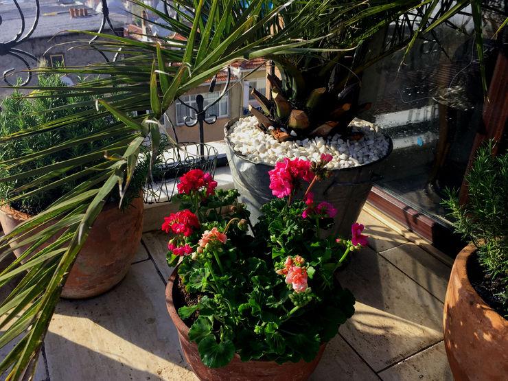 CENGİZ ÖZEK-TERAS PEYZAJ PROJE&UYGULAMA // CENGIZ OZEK - TERRACE LANDSCAPE PROJECT&APPLICATION AYTÜL TEMİZ LANDSCAPE DESIGN Tropikal Balkon, Veranda & Teras