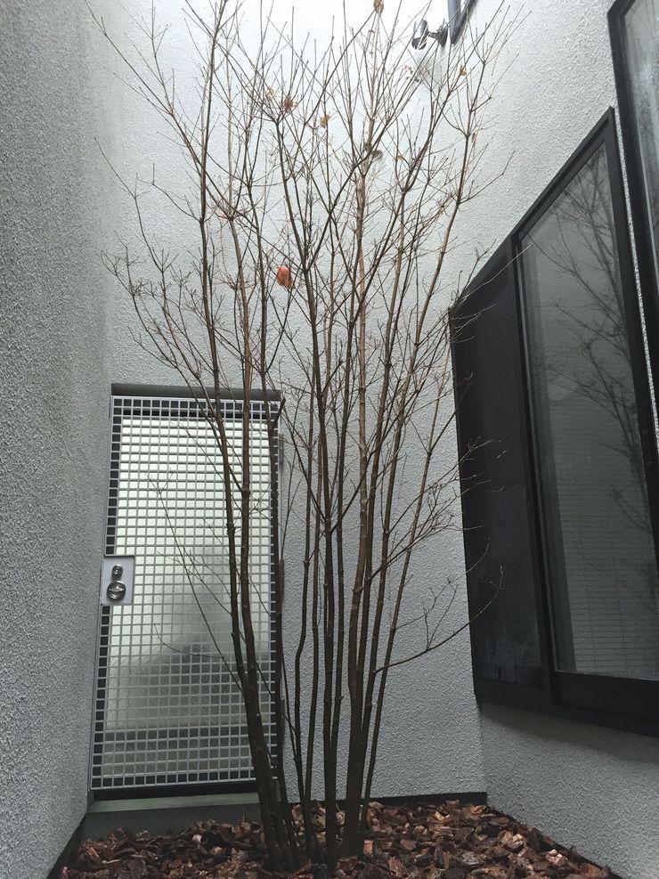 Shikinowa Design Modern style gardens