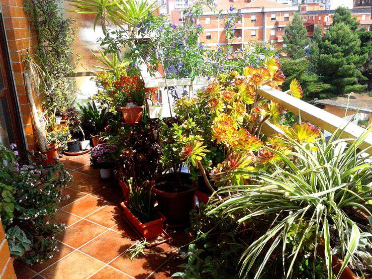 Arredo Verde_Terrazzo Urbano Filippo Fiori Architetto Balcone, Veranda & Terrazza in stile moderno