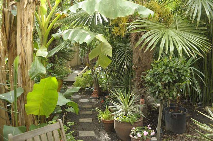 view to koi pond object architecture JardinFleurs & Plantes Vert