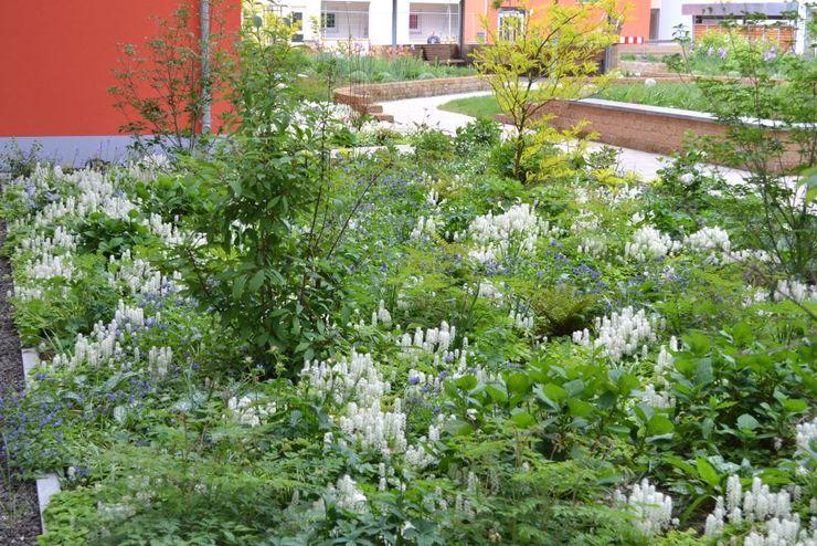 Schaumblüte, Geißbart, Lungenkraut, u.a. Stauden; gelblaubiger Lederhülsenbaum, Ball-Hortensien, Duft-Schneeball, Blumen-Hartriegel KAISER + KAISER - Visionen für Freiräume GbR GartenPflanzen und Blumen