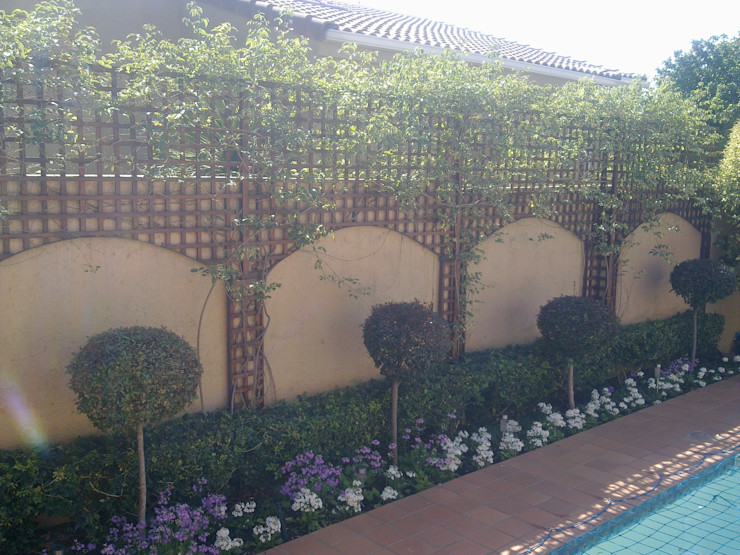 TRELLIS SCREEN WITH ARCHES Oxford Trellis Modern Garden