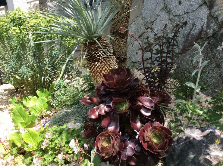 green team co Mediterranean style garden Wood Purple/Violet