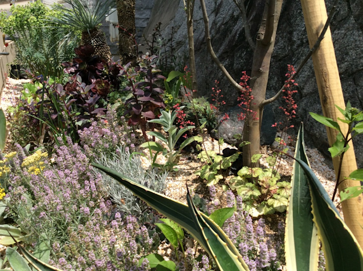 green team co Mediterranean style garden Wood Green