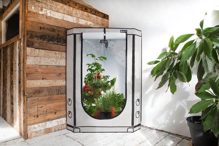 HOMEbox VISTA TRIANGLE Zimmergwächsraum HOMEbox Tropischer Multimedia-Raum Beige