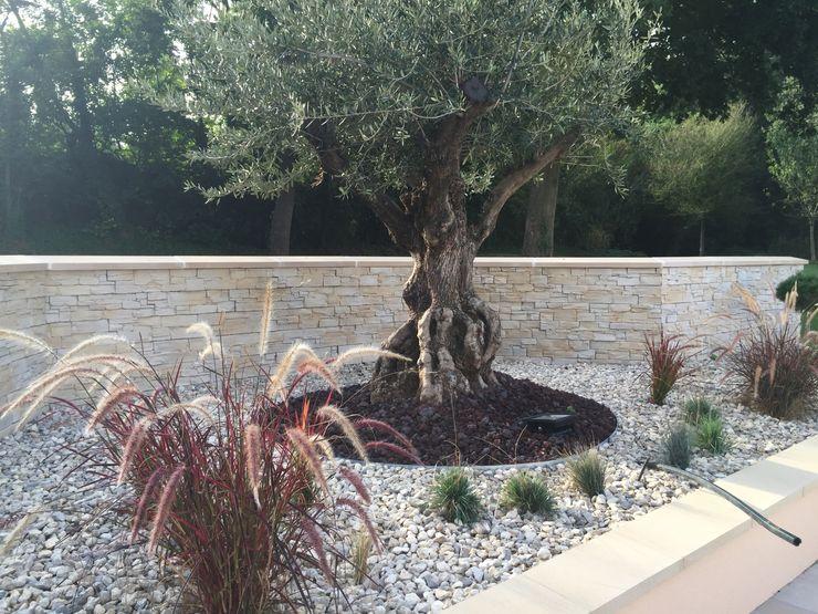 Un air de Provence DCPAYSAGE JardinFleurs & Plantes