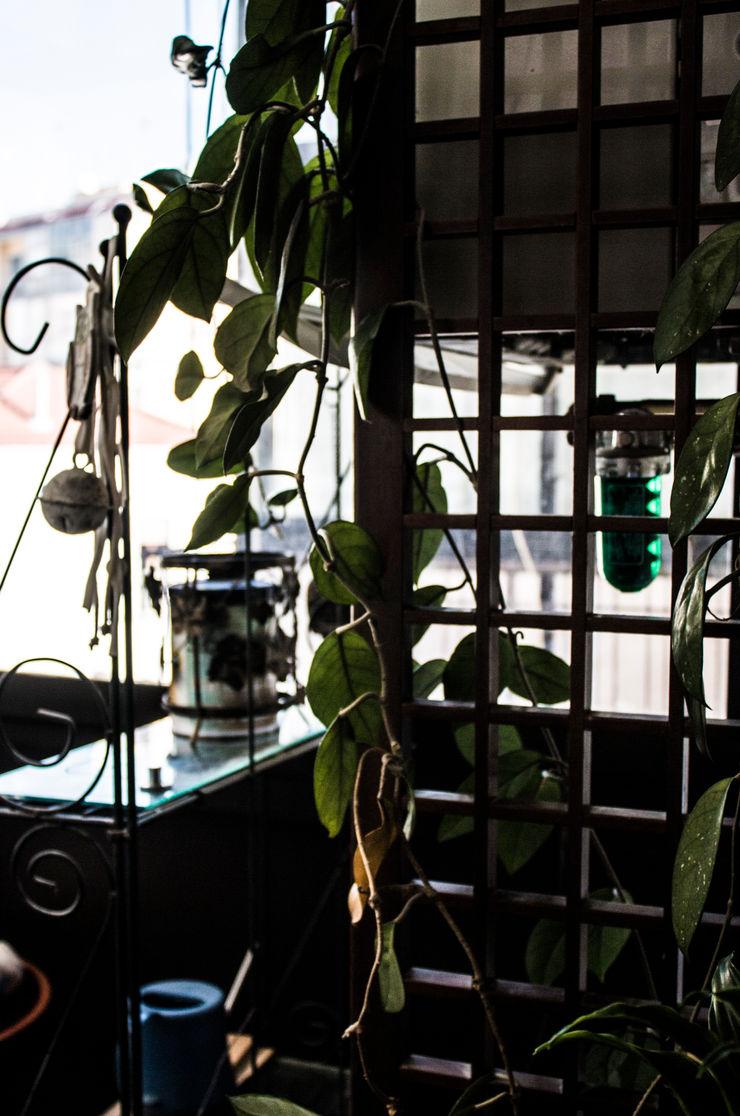 formatoa3 Studio Balconies, verandas & terraces Plants & flowers