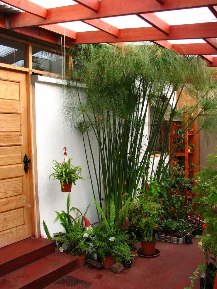 Vortice Design Ltda Rustic style garden