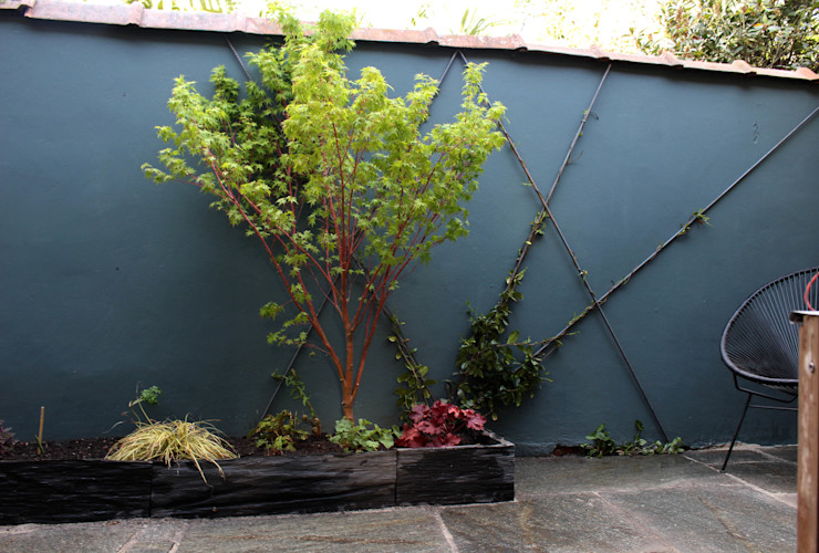 Érable japonnais Constans Paysage Jardin asiatique