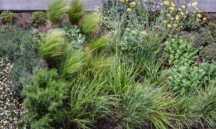 Perennial and grass planting Tom Massey Landscape & Garden Design Jardin moderne
