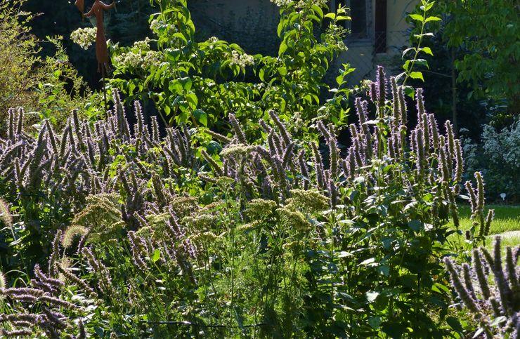 Agastache im Beet an der Terrasse KAISER + KAISER - Visionen für Freiräume GbR Garten im Landhausstil