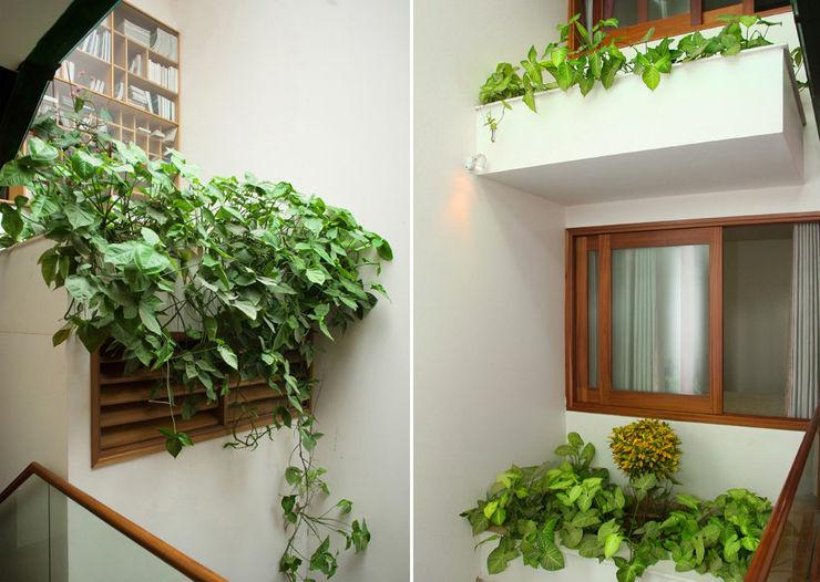 Bồn cây trước cửa sổ, khu giếng trời cũng trồng nhiều cây phù hợp với điều kiện ánh sáng. Công ty TNHH TK XD Song Phát Giếng trời Đồng / Đồng / Đồng thau White