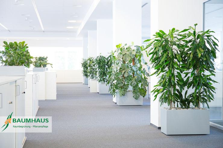Pflanzen - der ideale Raumteiler BAUMHAUS GmbH Raumbegrünung Pflanzenpflege Moderne Geschäftsräume & Stores