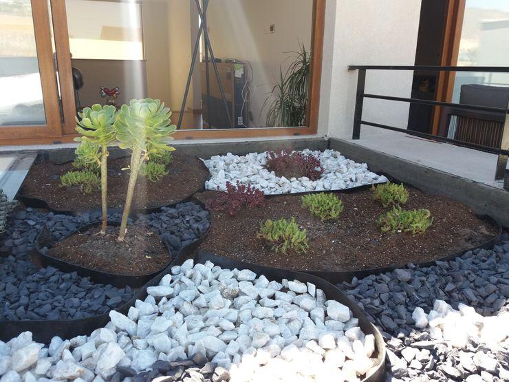 Otra vista del techo verde con suculentas homify Jardines con piedras