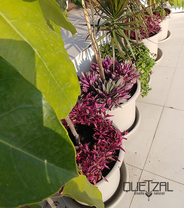 Macetería en terraza Quetzal Jardines Balcones y terrazas de estilo tropical