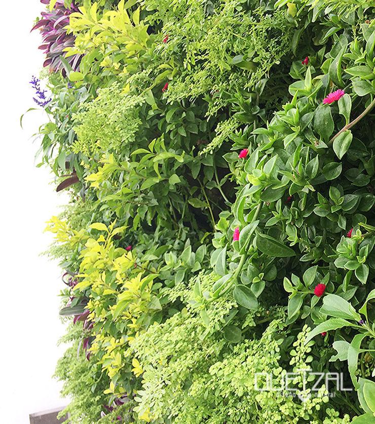 Jardín vertical residencial Quetzal Jardines Jardines de estilo minimalista