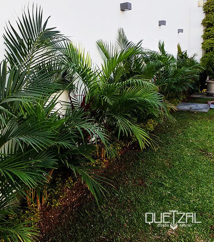 Paisajismo en residencia Quetzal Jardines Jardines de estilo tropical