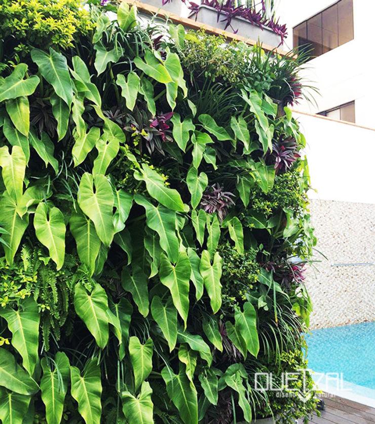 Jardín vertical residencial Quetzal Jardines Piscinas de estilo moderno