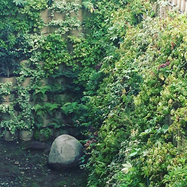 reformación de jardines Clínica UC San Carlos de Apoquindo Agroinnovacion paisajismo sustentable Clínicas / Consultorios Médicos